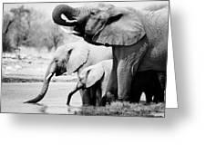 Namibia Elephants Greeting Card by Nina Papiorek
