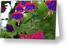 Nan's Fushia Greeting Card by Gwyn Newcombe