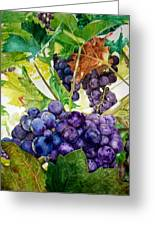 Napa Harvest Greeting Card by Lance Gebhardt