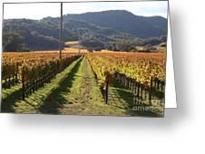 Napa Valley Vineyard . 7d9020 Greeting Card by Wingsdomain Art and Photography