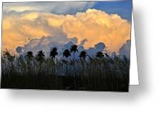 Native Florida Greeting Card by David Lee Thompson