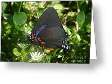 Nature In The Wild - Black Beauty Greeting Card by Lucyna A M Green