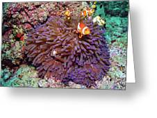 Nemo's Home Greeting Card by Joerg Lingnau