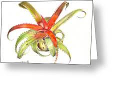 Neoregelia Pendula Greeting Card by Penrith Goff