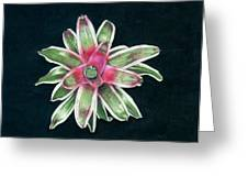 Neoregelia Terry Bert Greeting Card by Penrith Goff