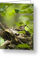 Nesting Birds - Wood Thrush Greeting Card by Christina Rollo
