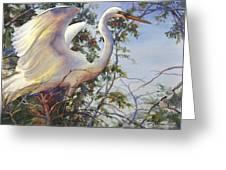 Nesting Egret Greeting Card by Sue Zimmermann