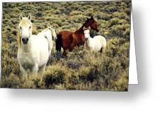 Nevada Wild Horses Greeting Card by Marty Koch