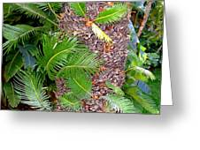 New Palms Greeting Card by Mindy Newman