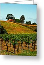New Vineyard Greeting Card by Gary Brandes