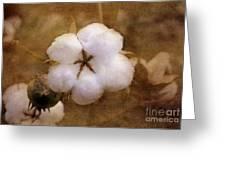 North Carolina Cotton Boll Greeting Card by Benanne Stiens