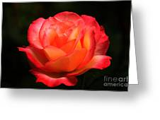 Not A Second Hand Rose Greeting Card by James Eddy