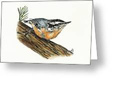 Nuthatch Greeting Card by Shari Nees