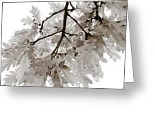 Oak Leaves Greeting Card by Frank Tschakert