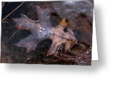Oak Preservation Greeting Card by Adam Long