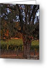 Oak Tree And Vineyards In Knight's Valley Greeting Card by Charlene Mitchell