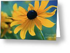 Ocealum 02 Greeting Card by Aimelle