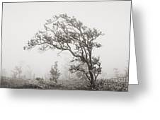 Ohia Lehua Tree Greeting Card by Greg Vaughn - Printscapes