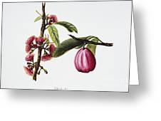 Ohiaai Greeting Card by Hawaiian Legacy Archive - Printscapes