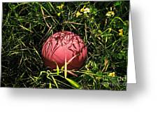 Old Basketball In The Grass Greeting Card by Robert Sawin