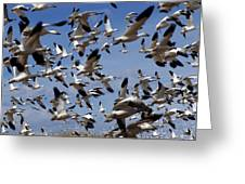 On A Mission Bosque Del Apache Greeting Card by Kurt Van Wagner
