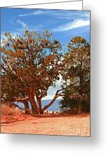 On The Edge Greeting Card by Kathleen Struckle