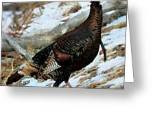 On The Run Greeting Card by William Gillam