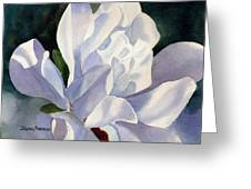 One Star Magnolia Blossom Greeting Card by Sharon Freeman