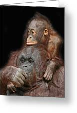 Orang-utan Mother And Baby Greeting Card by Larry Linton