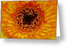 Orange And Black Gerber Center Greeting Card by Amy Vangsgard