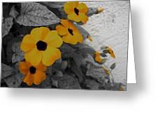 Orange Black Eyed Susan Greeting Card by Flower Bomb