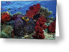 Orange-finned Clownfish And Soft Corals Greeting Card by Terry Moore
