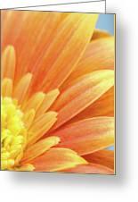 Orange Gerbera Petals Greeting Card by Wim Lanclus