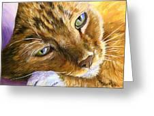 Orange Tabby Cat Framed Print Greeting Card by Mary Jo  Zorad