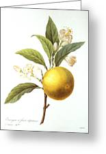 Orange Tree Greeting Card by Granger