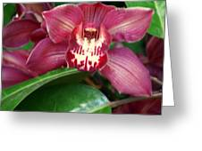 Orchid 10 Greeting Card by Marty Koch