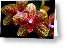 Orchid 15 Greeting Card by Marty Koch