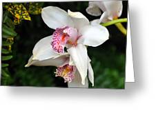 Orchid 29 Greeting Card by Marty Koch