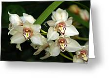 Orchid 3 Greeting Card by Marty Koch