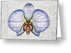 Orchid Greeting Card by Charles Harden