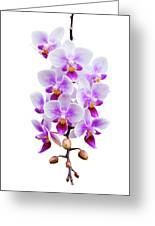 Orchid Greeting Card by Meirion Matthias