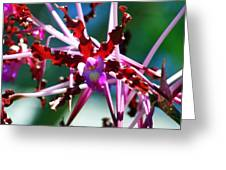 Orchid Spider Greeting Card by Karen Wiles