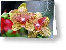 Orchids 35 Greeting Card by Marty Koch