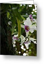 Orchids Greeting Card by Deborah Molitoris