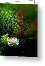 Orchids In The Rain Greeting Card by Shirley Sirois