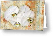 Orchids Upon The Rough Greeting Card by Andee Design