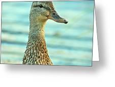 Oscar le canard Greeting Card by Aimelle