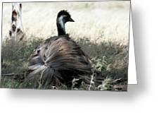 Ostracized Ostrich Greeting Card by Douglas Barnard