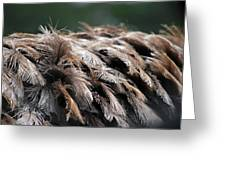 Ostrich Feathers Greeting Card by Teresa Blanton