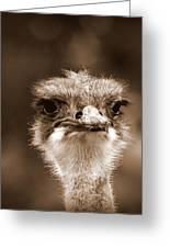 Ostrich In Sepia Greeting Card by Tam Graff